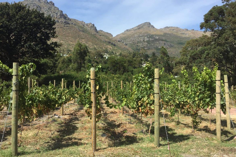 Big Preparations in the Little Vineyard