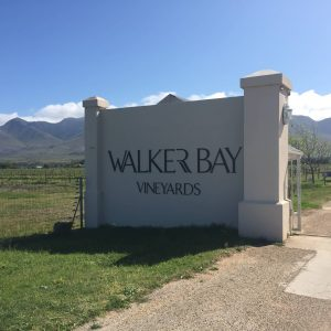Walker Bay Vineyards