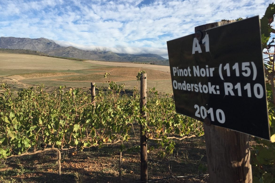 Anysbos a Wine Estate to Look Out For