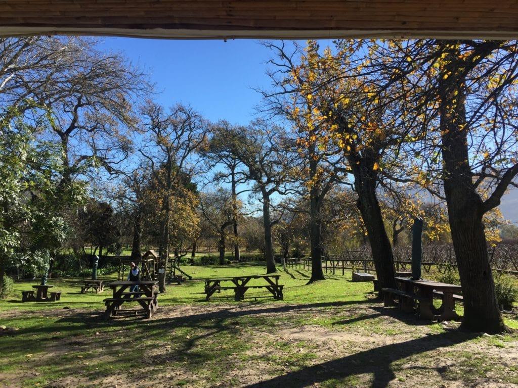Old Oaks at La Bourgogne