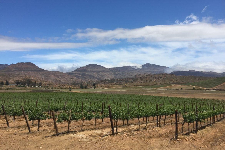 Altitudes with Wine!